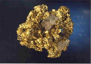 گیاهانی که طلا جذب میکنند